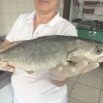 peixaria-roque-joinville