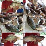 pesque-pague-didi