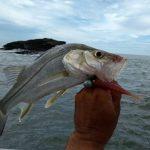 wake-guia-pesca