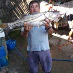 guia-pesca-paranagua