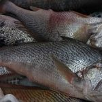 peixaria-felipemar