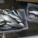 peixaria-pinguim-zona-sul