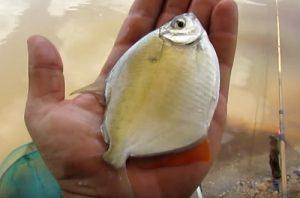 pescaria-barranco