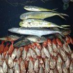 pescaria-peixes-barco
