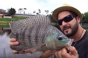 como-pescar-tilapias-frio