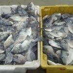 waldir-pescarias