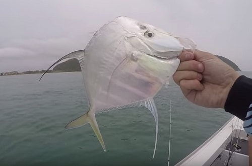 pescaria-costeira