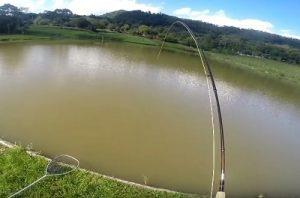 pescaria-carpa-capim-fly