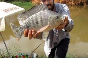 bons-peixes-beira-rio